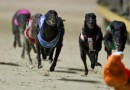 Gold Coast greyhound racing at Pimpama