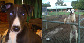 Greyhounds Syndications – Symmetry x Benjalina