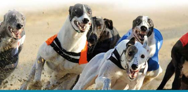Greyhounds Online – Australia's Number 1 Greyhound Website
