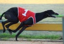 Beast ready to unleash in Group 2 Launching Pad heats